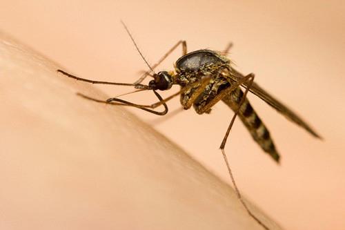 Virus Zika an nao co the xam nhap Viet Nam dip Tet