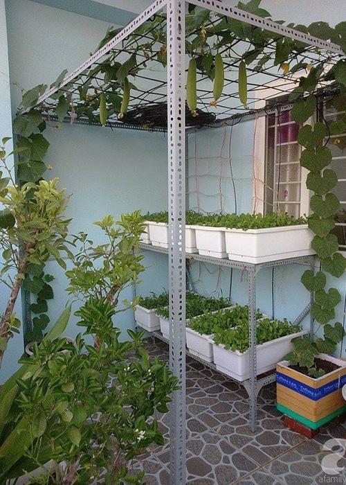Vuon rau nho xinh xanh muot tren san thuong cua me Viet