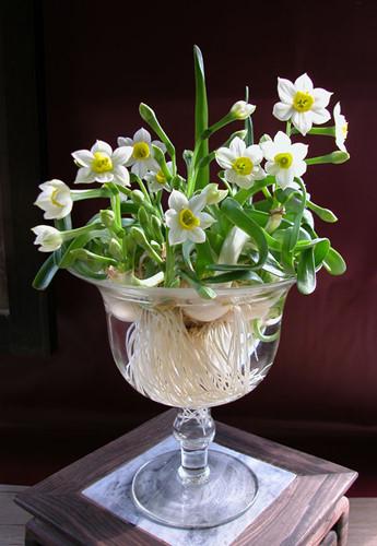 Nhung loai hoa cau tai nhat dinh phai co trong nha ngay Tet-Hinh-3
