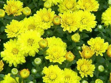 Nhung loai hoa cau tai nhat dinh phai co trong nha ngay Tet-Hinh-5
