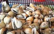 Sự thật bất ngờ về ốc nhảy, đặc sản vùng biển Việt