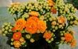 Những cây hoa vừa đẹp vừa lọc sạch không khí trong nhà