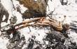 Bí ẩn vây quanh xác ướp người băng nổi tiếng lịch sử