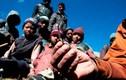 Mồ hôi và máu trong cuộc săn lùng Viagra của Himalaya