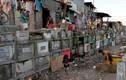 Cảnh sống chung với người chết ở thủ đô Philippines
