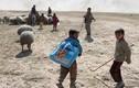 Cảnh thường dân Iraq mang theo gia súc tháo chạy khỏi Mosul