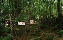 Sự thật rùng mình về khu rừng tự sát ở Nhật Bản