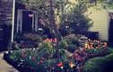 Mê mẩn vườn hoa đẹp tuyệt của gia đình Việt ở Mỹ