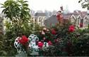 Ngôi nhà 5 tầng rực rỡ sắc hoa của thầy giáo già