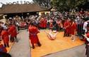 Tổ chức lễ hội chém lợn, mất danh hiệu làng văn hóa?