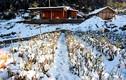 """Ngắm tuyết trên những thửa ruộng bậc thang của """"nóc nhà Đông Dương"""""""