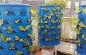 Chồng đảm biến sân thượng thành nơi trồng rau nuôi cá