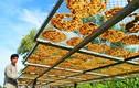 Tận mắt quy trình sản xuất chuối khô Cà Mau nổi tiếng