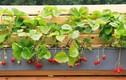 Mẹo tạo khu vườn mini xanh tươi cây cỏ cho nhà phố