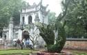 Thích thú cặp rồng kết từ cây xanh ở Văn Miếu