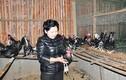Thăm trang trại của nữ tỷ phú nuôi chim, gà quý hiếm