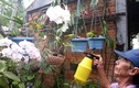 Chiêu độc: Dùng bia để tưới cây, bón nấm ở Phú Yên