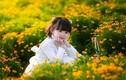 """Nhóc tỳ xinh như thiên thần gây """"sốt"""" với ảnh hoa vàng"""