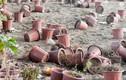 Cây cảnh chết khô hàng loạt trên hầm chui nghìn tỷ