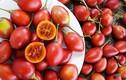 Sốt xình xịch cà chua thân gỗ giá 500.000 đồng một cây