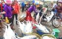 Ngư dân trúng mẻ cá lịch sử trị giá khoảng 5 tỷ đồng