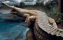 """Cá sấu cổ đại có thể """"làm thịt"""" cả khủng long"""
