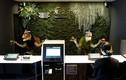 """Cá robot bơi lội trong """"khách sạn người máy"""" ở Nhật Bản"""