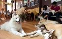Sài Gòn cà phê chó mèo hút hồn giới trẻ