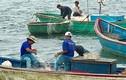"""Thuyền, thúng """"dàn trận"""" vây bắt cá bên thềm đảo Lý Sơn"""