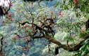 """Vượt suối, băng rừng chinh phục Pú Tả Lèng mùa """"núi nở hoa"""""""