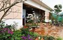 Ngôi nhà đáng mơ ước đẹp như cổ tích tại ngoại thành Hà Nội