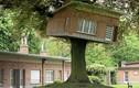 Trầm trồ thiết kế nhà trên cây sáng tạo nhất thế giới