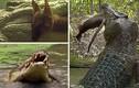 Rợn người kỹ năng tiêu diệt con mồi của cá sấu nước mặn