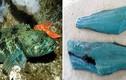 Điều kỳ diệu bên trong con cá hiếm đại dương