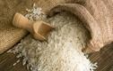 Gạo Tám xoan Hải Hậu quý hiếm nổi tiếng như thế nào?