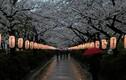"""7 sự thật """"gây choáng"""" về lịch sử nước Nhật"""