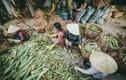 Chùm ảnh: Bên trong khu chợ bắp lớn nhất Sài Gòn