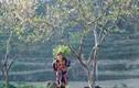 """Cảnh """"núi ấp ôm mây"""" tuyệt đẹp trên cao nguyên đá Đồng Văn"""