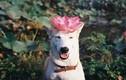 Gặp gỡ cô chó hạnh phúc nhất thế giới