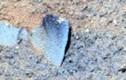 Bất ngờ hình ảnh giống y lưỡi xẻng trên sao Hỏa