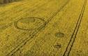 Vòng tròn lạ trên cánh đồng ở Anh dấy lên bí ẩn UFO