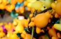 Điều ít người biết về quả dư thừa có chất độc chết người