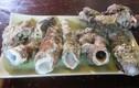 Khám phá ngạc nhiên về loại hải sản lạ giống hệt tẩu thuốc