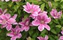 Sự thật về loài hoa đẹp mang tên ông lão gây sốt