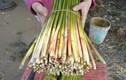 Thích thú khám phá về cây cỏ năn bộp nổi tiếng Bạc Liêu
