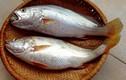 Hé lộ sự thật ít biết về cá đù miền Trung VN
