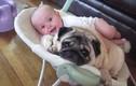 Tan chảy trước khoảnh khắc siêu đáng yêu giữa bé và cún cưng