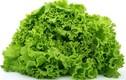 Bài thuốc chữa bệnh cực tốt từ các loại rau lá xoăn