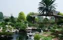 Những biệt thự sân vườn triệu đô xanh mướt của sao Việt