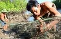 Mưu sinh bằng nghề bẫy bạch tuộc trong rừng ngập mặn